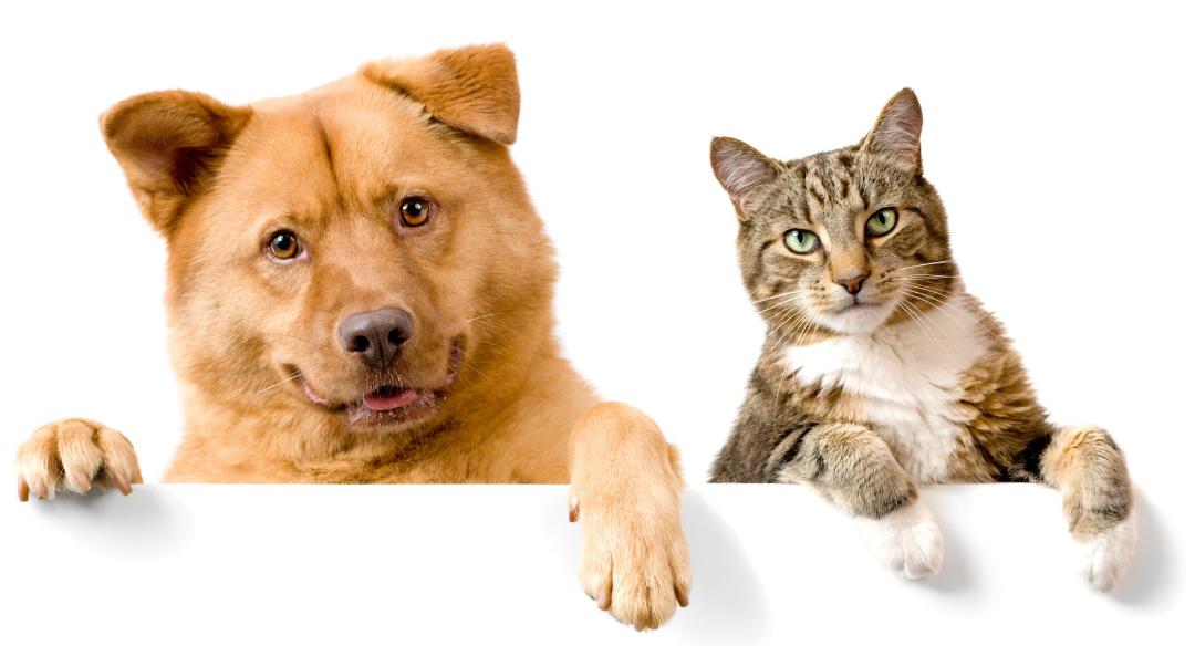 Eläinlääkäri koirille ja kissoilel