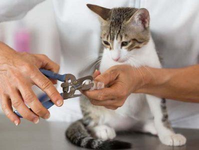 Kissa kynsienleikkuussa