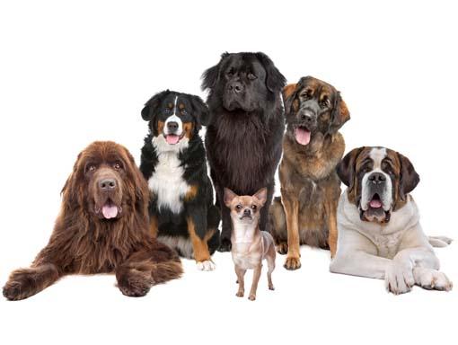 Erilaisia koiria