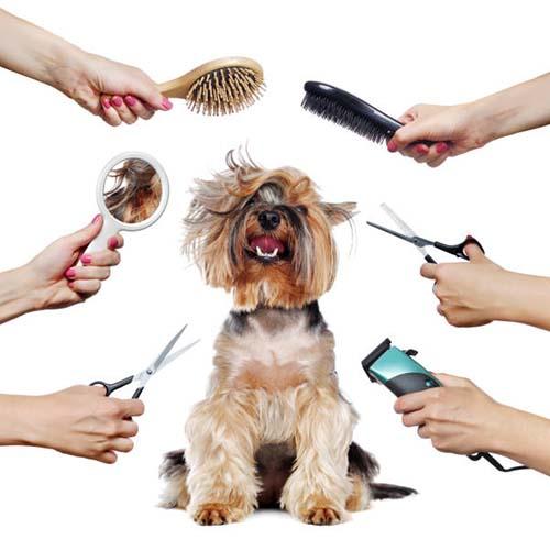 Kuvituskuva koiran turkinhoidosta