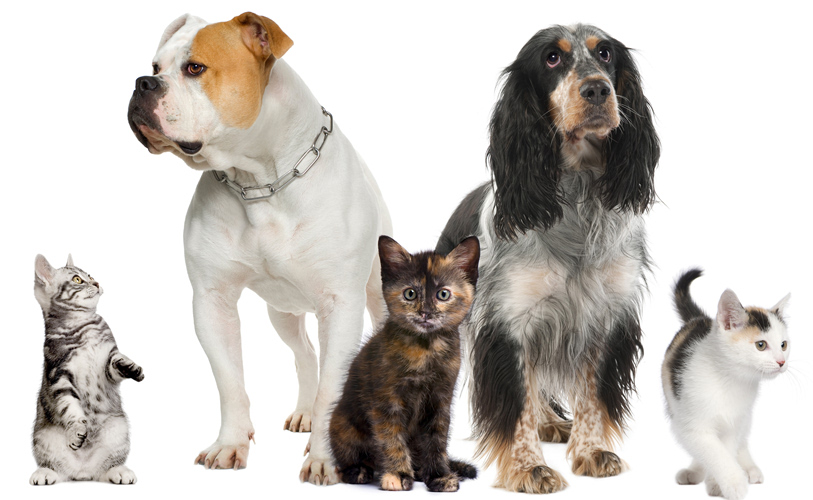 Ravitsemusneuvonta kissoille ja koirille