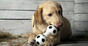 Aktivointia ja virikkeitä koirallesi