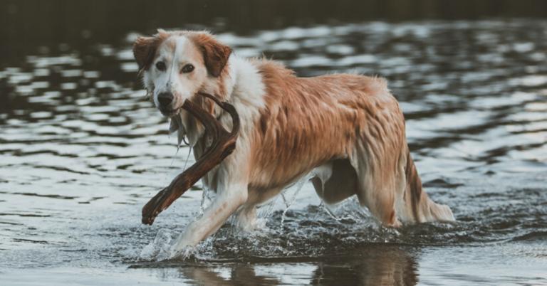 Keväällä on aika tehdä vuosihuolto myös koiran lihaksistolle